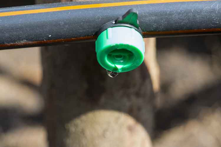 Watering made easy as dripper is inserted directly into feeder line