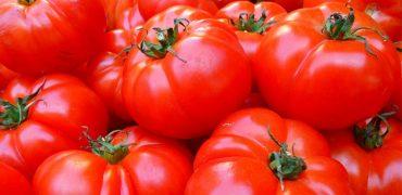 Squamis Tomatoes