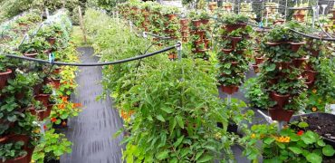 Productive Hydroponic Garden