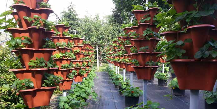 Vertical Hydroponics Outdoors