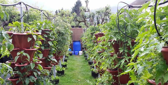 Near Vancouver Vertical Vegetable Garden