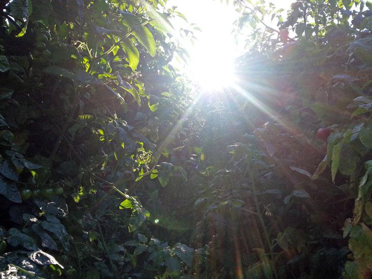 Rear View into the Sun