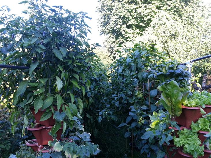 Vertical Garden Near Vancouver