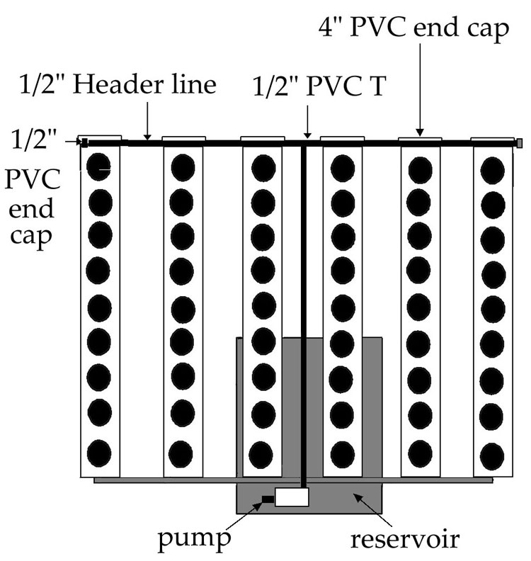 Top view of NFT pvc pipe system