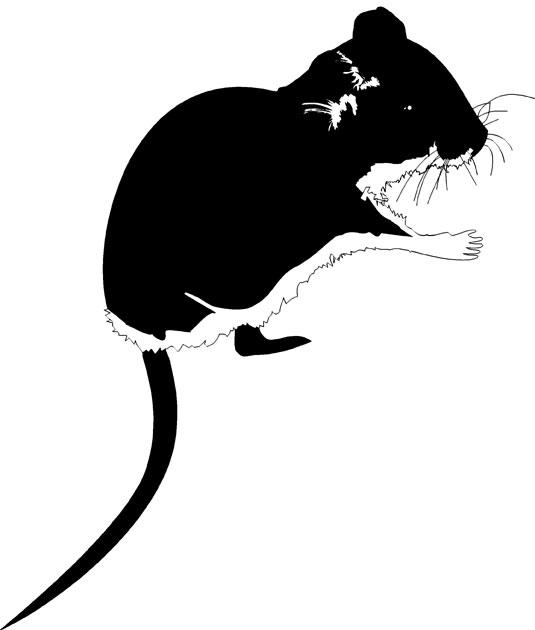 Mice in garden
