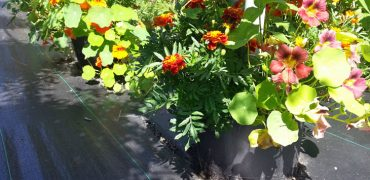 Bottom Flowers for eating and attracting bees.