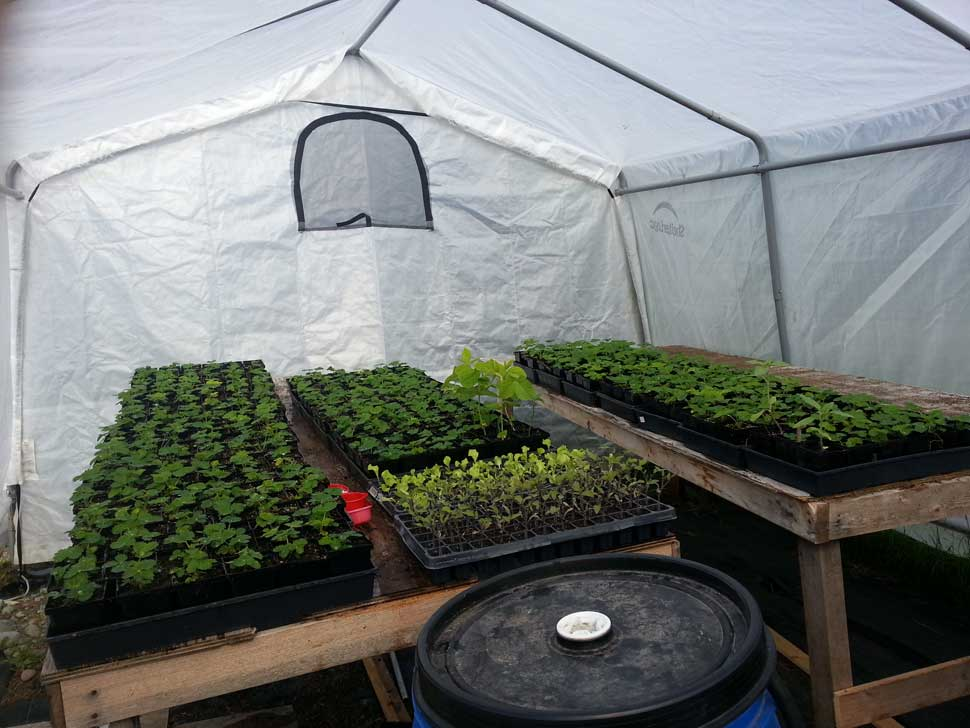 Seedlings moved to greenhouse