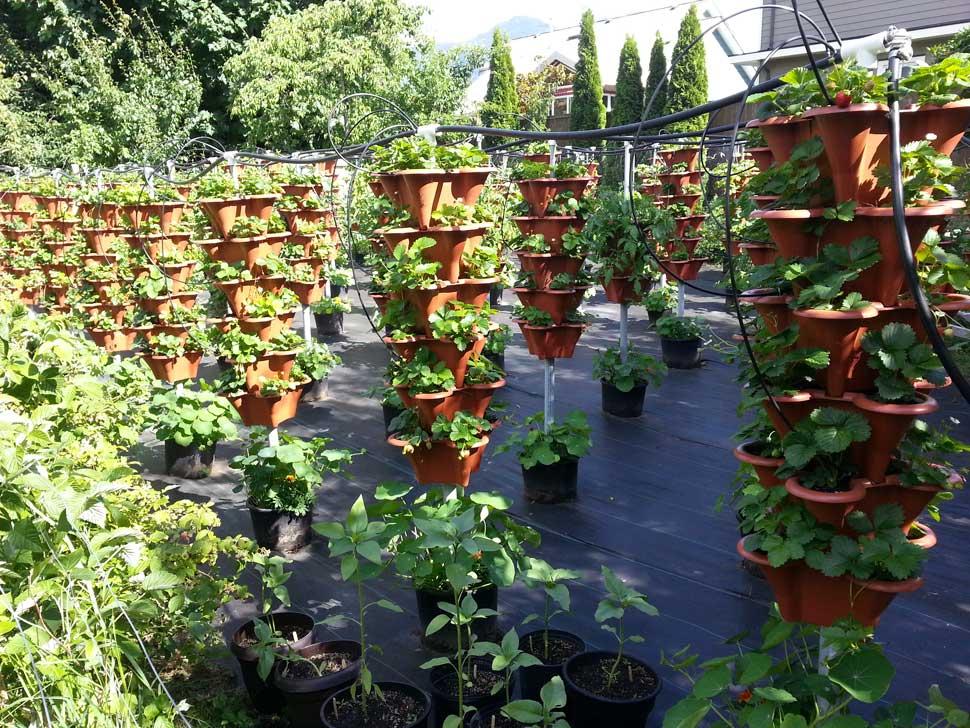 Expanded vertical garden