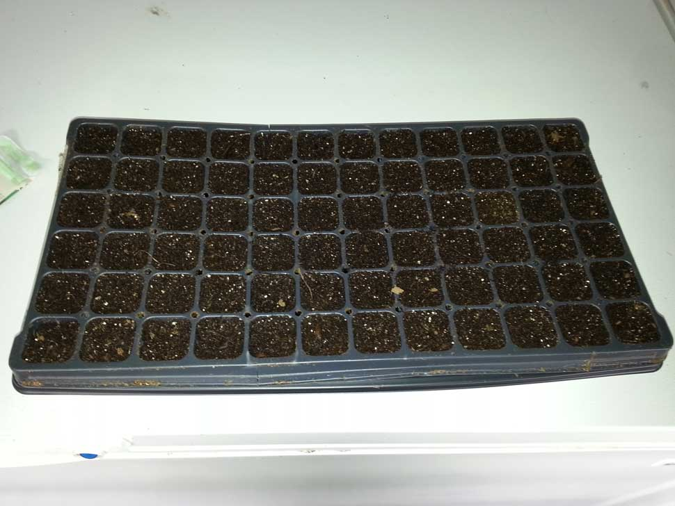 seedling flat 72 cell used for growing seventy two seeds in Squamish, Vancouver and Pacific Northwest gardens