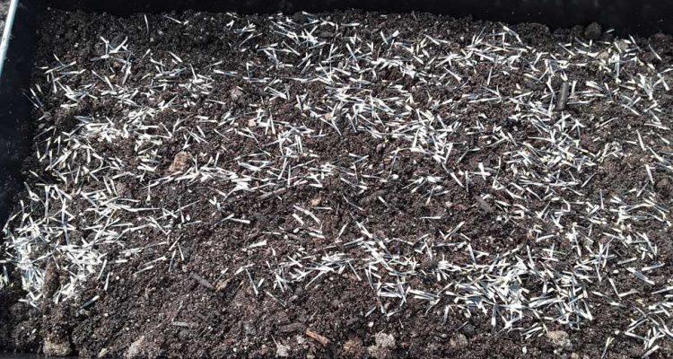 Mass Seed Planting