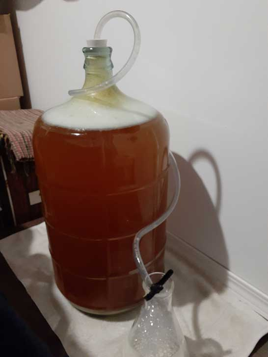 Apple cider in carboy with blow-off